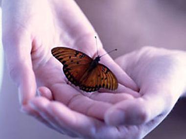 poesía sobre la primavera, La Mariposa Lita